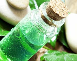 Chiết xuất tinh dầu tràm trà Melaleuca Alternifolia (Tea Tree) Leaf Oil Extract