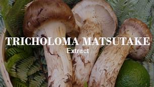 Khám phá công nghệ làm sáng da mới với Tricholoma Matsutake Extract