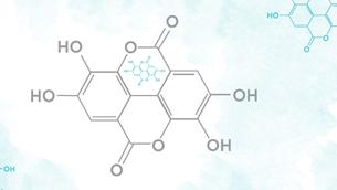 Ellagic Acid - giải pháp mới thay thế Hydroquinone làm trắng da